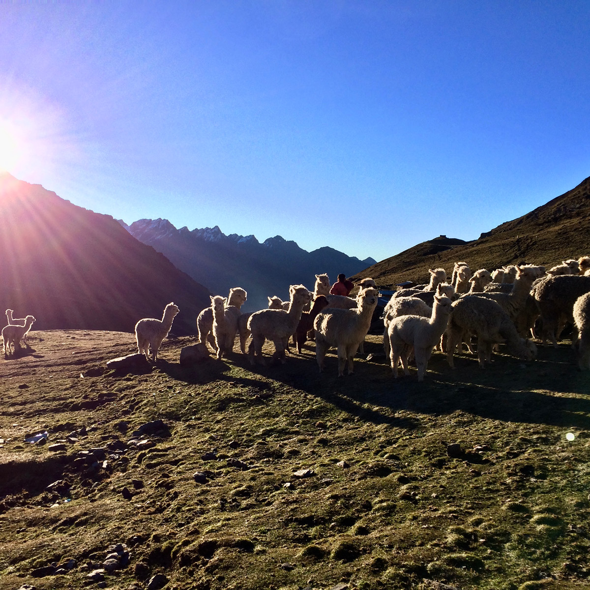 A view of a Peruvian mountainside with alpacas.